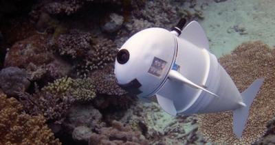 Casus balık robot