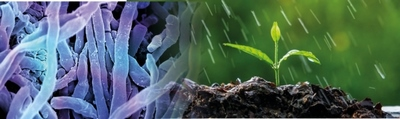 Streptomyces nedir ve ne işe yarar?